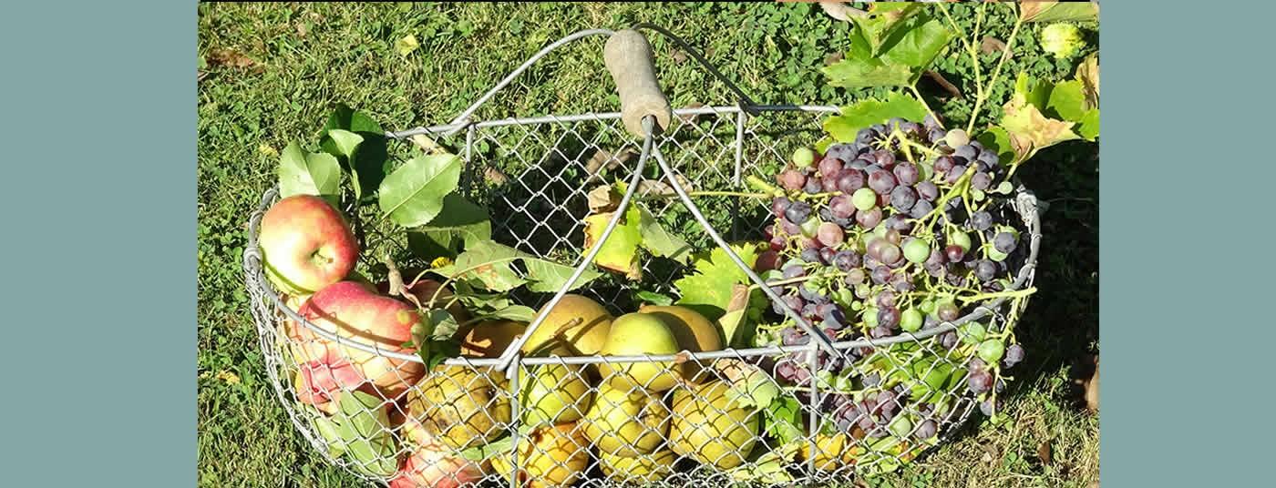 Les Pommes et Les Raisins
